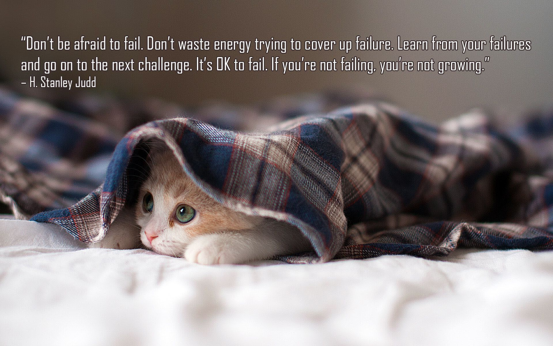 Don T Be Afraid To Fail Don T Waste Energy Trying To Cover Up Failure Learn From Your Failures And Go On T Cute Cat Wallpaper Sleepy Kitten Kitten Wallpaper