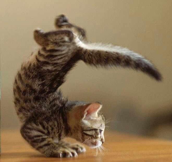 Yoga Cats And Kittens