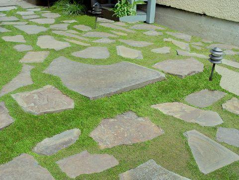 Leptinella Gruveri Miniature Brass Buttons Gardening Ideas Plants Summer Yard Ideas My Secret Garden