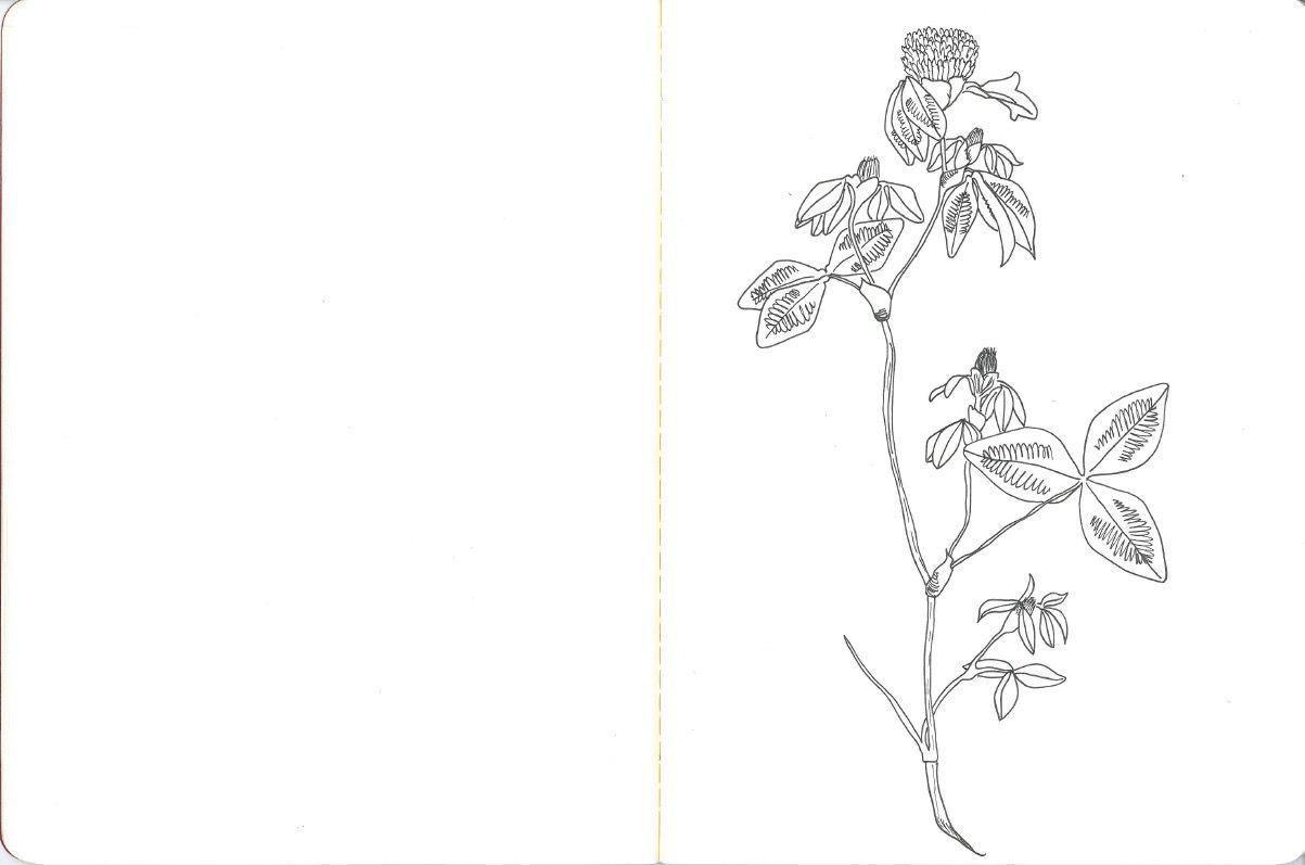 Botanical botanicalart flower flowerart bloom blossom fauna
