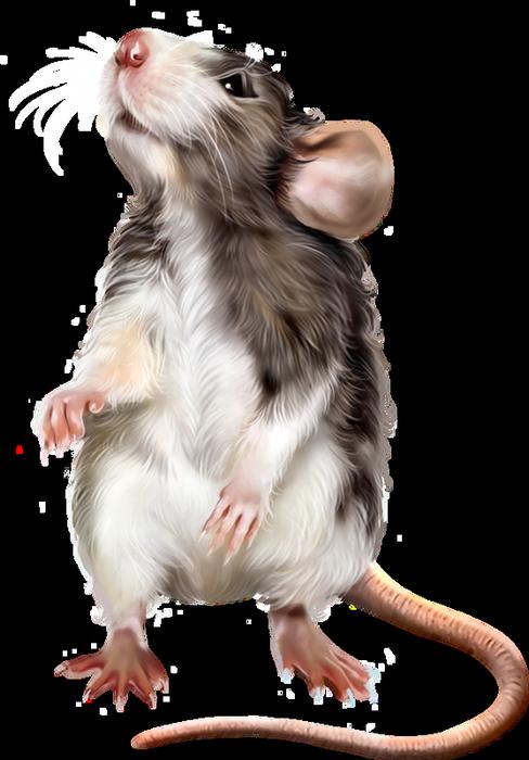 Mousedrawing Mouse Drawing Draw Art Illustration Farecizimi Fare Cizim Sanat Hayvan Illustration Hayvanlar