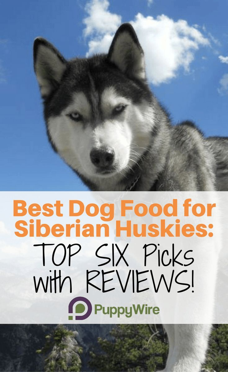 Best Dog Food For Huskies Top 6 Picks In 2020 With Reviews