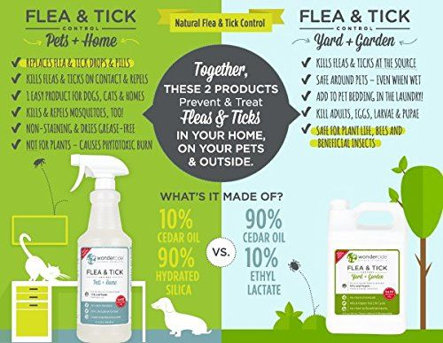Ingredients In Dog Flea Shampoo Is Toxic To Cats