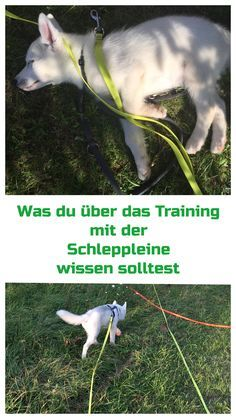 Photo of 5 tips for the correct use of the towline – Basics anti-hunting training