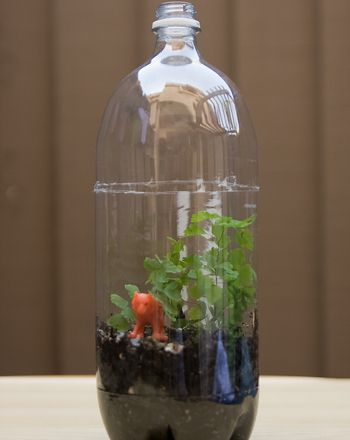 Terrarium! A living ecosystem in a 2L soda bottle. We did this in our 4th grade class and it was fun, easy, and a good lesson! We used this video as a reference: https://www.youtube.com/watch?v=Hqrrbb8fGr4.