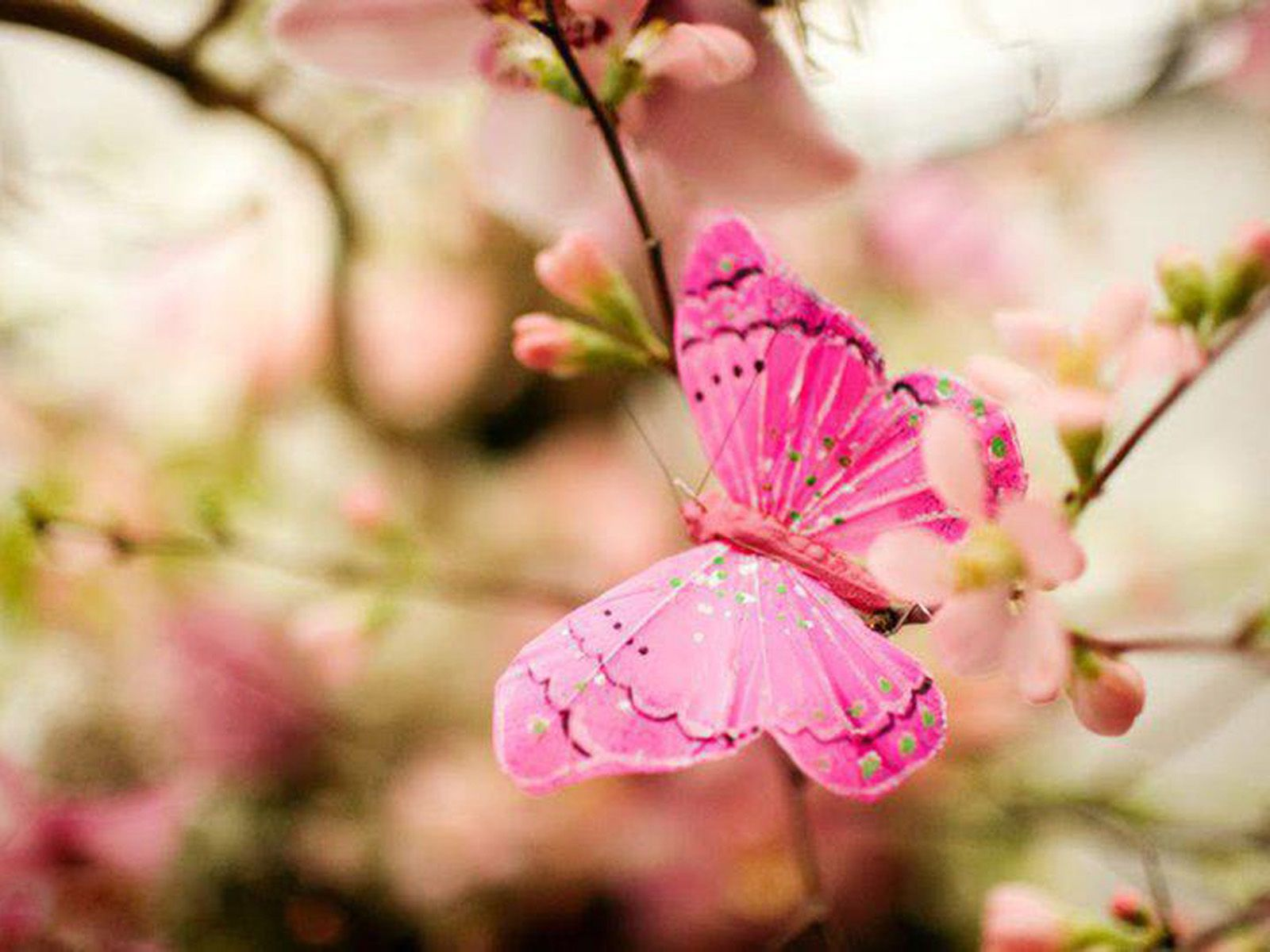 Pink Butterfly Background | Butterflies | Pinterest ...