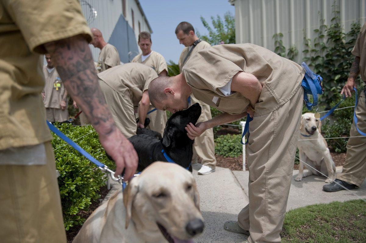 16++ Buncombe county animal shelter ideas