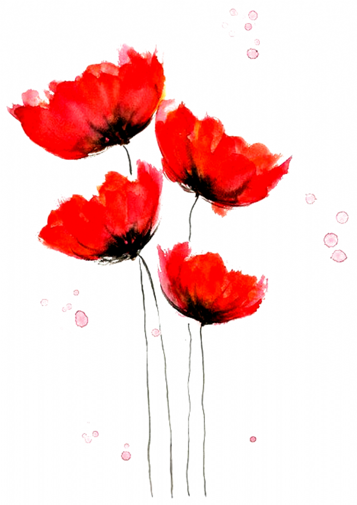 Aquarell Mohnblumen Buscar Con Google Pinturas Tatto Tattoos Tatto Fonts Tattoo Q In 2020 Watercolor Poppies Simple Watercolor Flowers Flower Painting Canvas