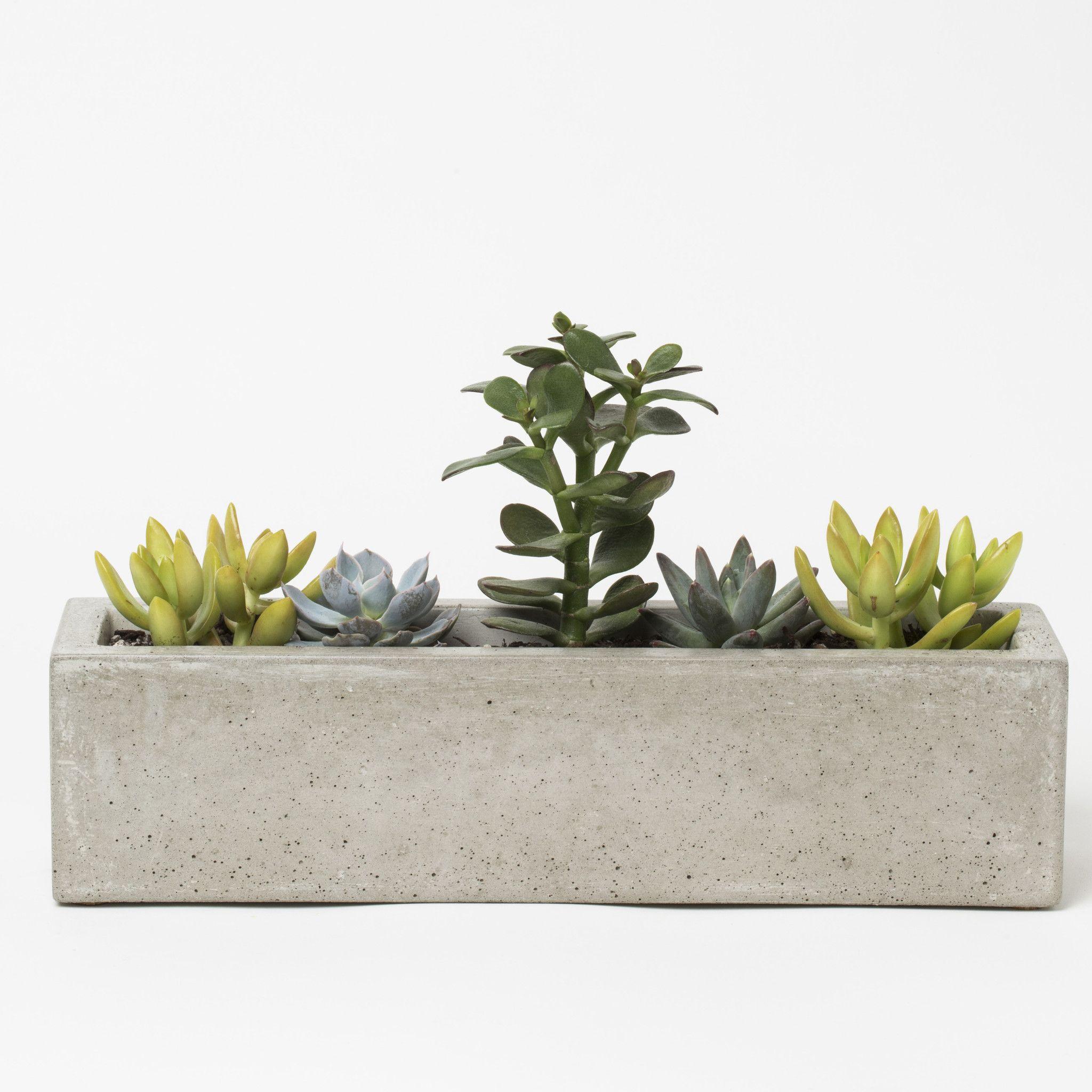 plants not included Concrete house planter