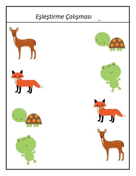 Hayvanat Bahcesi Calismalari Okul Oncesi Faaliyetler Hayvanlar
