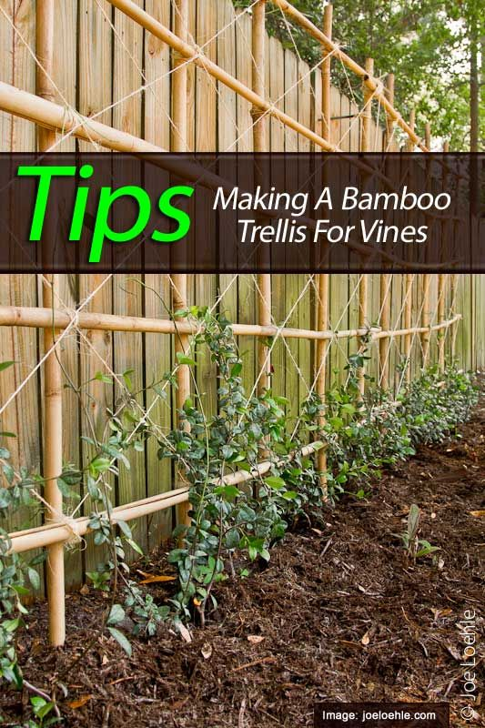 Trellis Plants: What Are 10 Of The Best Flowering Trellis ...