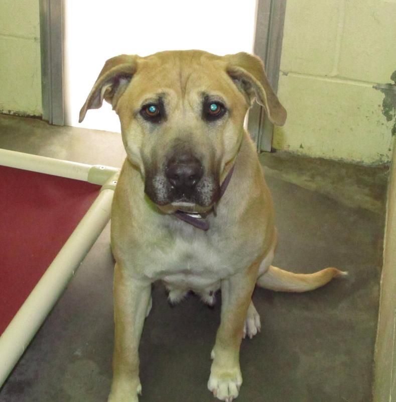 HELP! Lee County NC Animal Services Adoption available