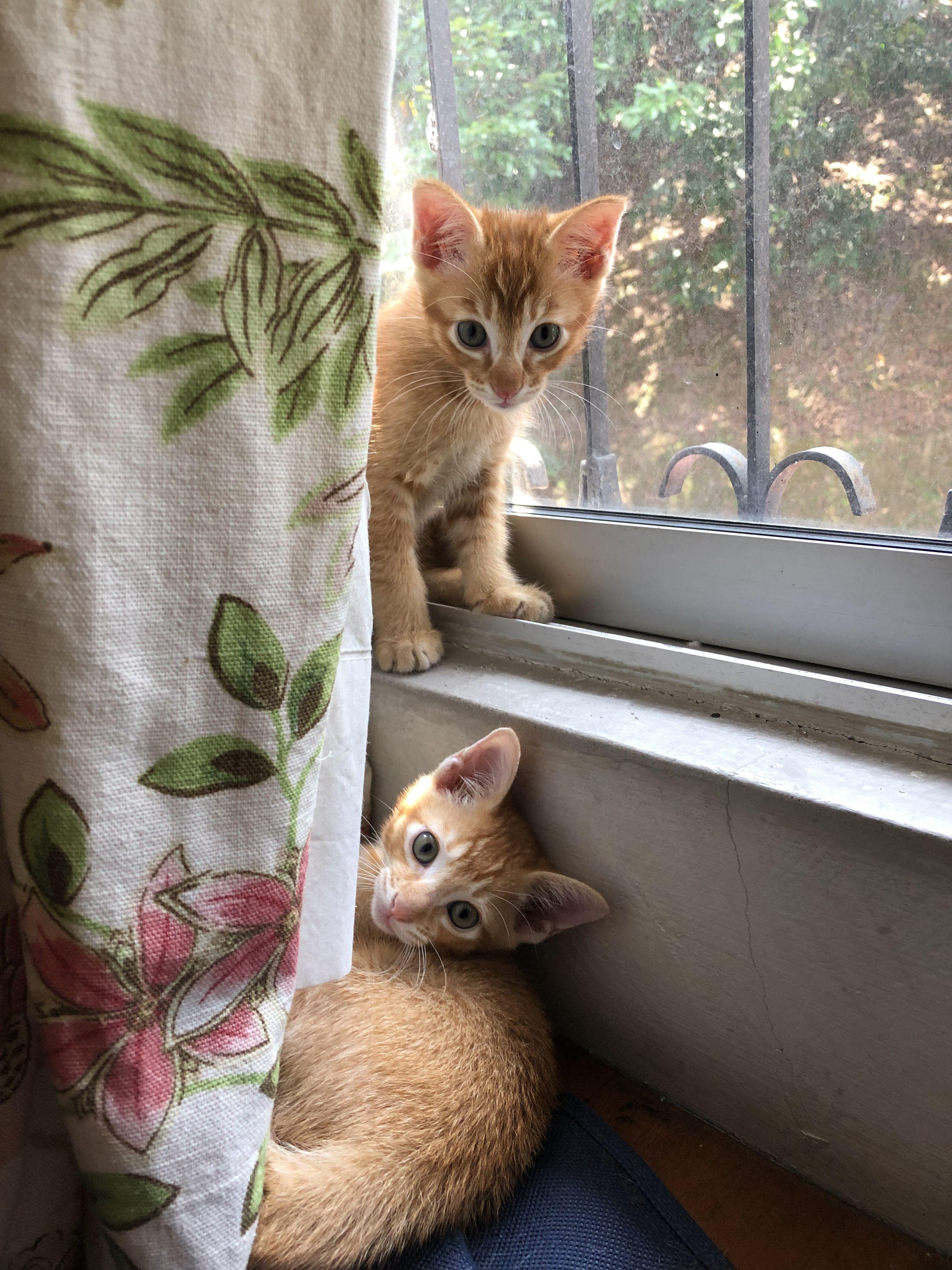 Boy 1 & Boy 2 Born Oct 21, 2018 Cute animals, Cute