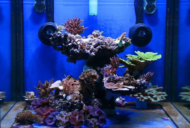 Top Reef Tank Aquascapes | My old 2m Reef | Acquario ...