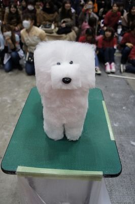 An Entry From Ohgravy Funny Dog Pictures Dog Show Dog Haircuts