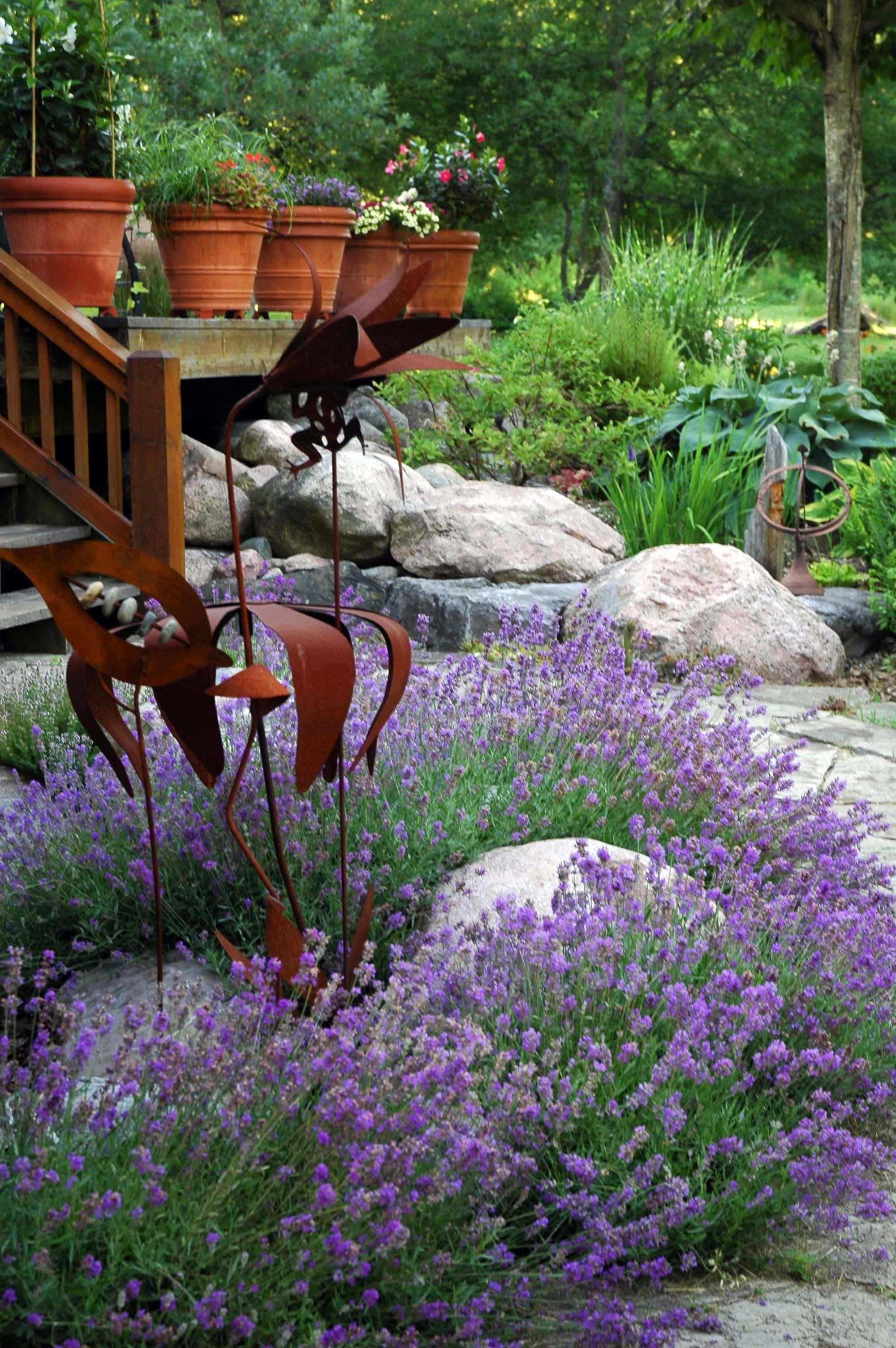 Lavender | Growing lavender, Big backyard, Garden on Big Backyard Garden Ideas id=63200
