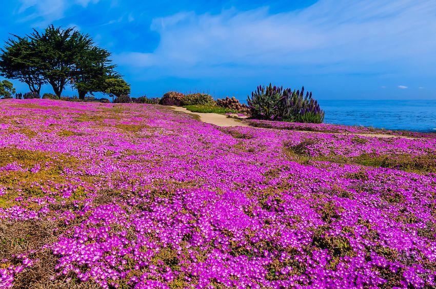 5cf01189e4a76961bed044a735e7e258 - Pacific Grove Marine Gardens State Marine