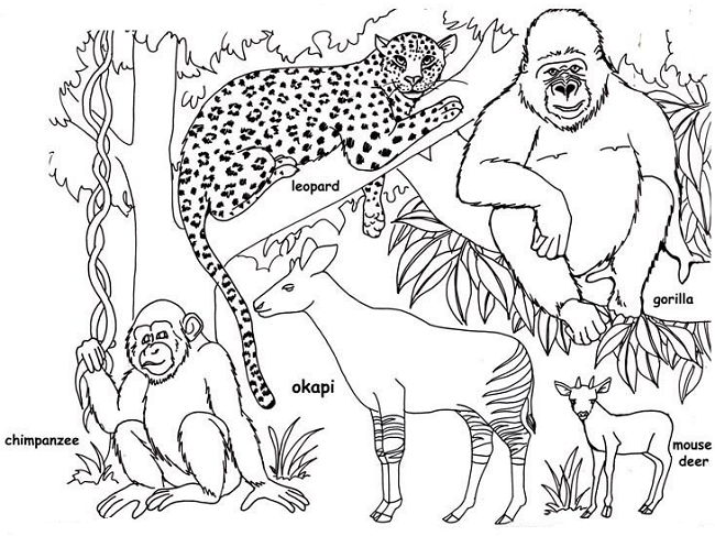 Animal Coloring Page For Brazil Jungle Coloring Pages Animal Coloring Pages Animal Coloring Books