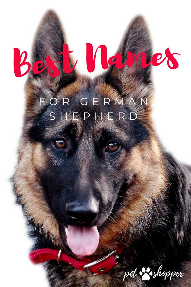 German Shepherd Names Top Best List Male Female German Shepherd Names Dog Names Funny Dog Names
