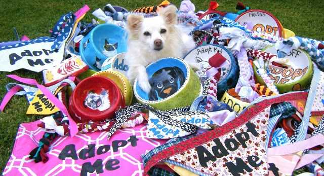 Craft Ideas For Shelter Donations Lend A Paw Animal Shelter