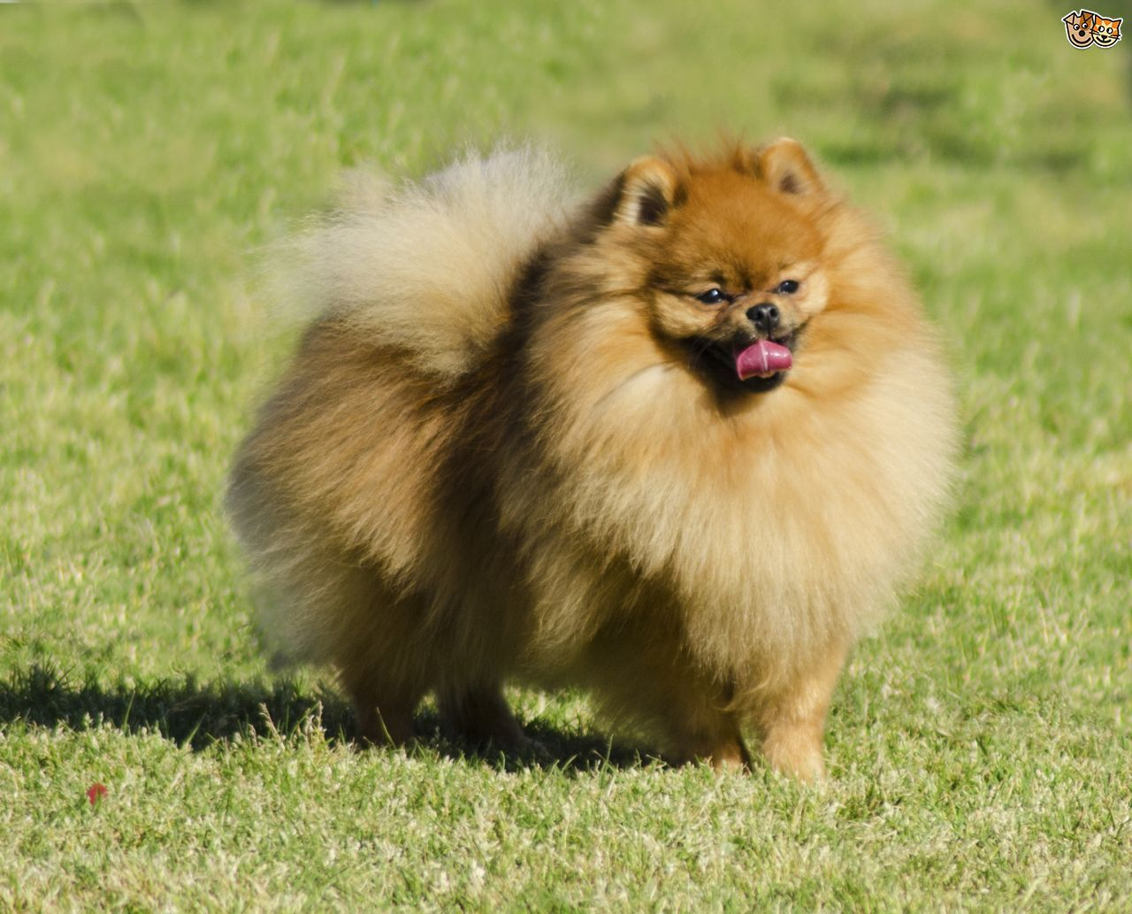 Photos Of Small Dogs Google Search
