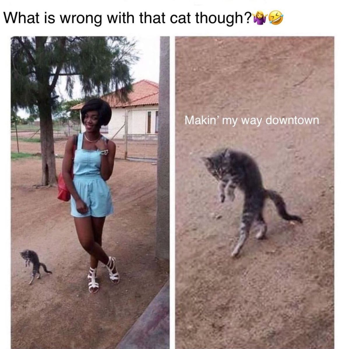 What Is Wrong With That Cat Though Makin My Way Downtown Funny Animal Jokes Animal Jokes Funny Cat Memes