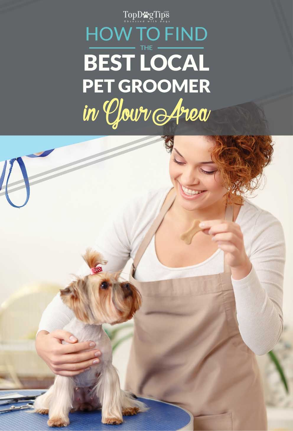 How To Find Local Dog Groomers In Your Area Dog Care 101