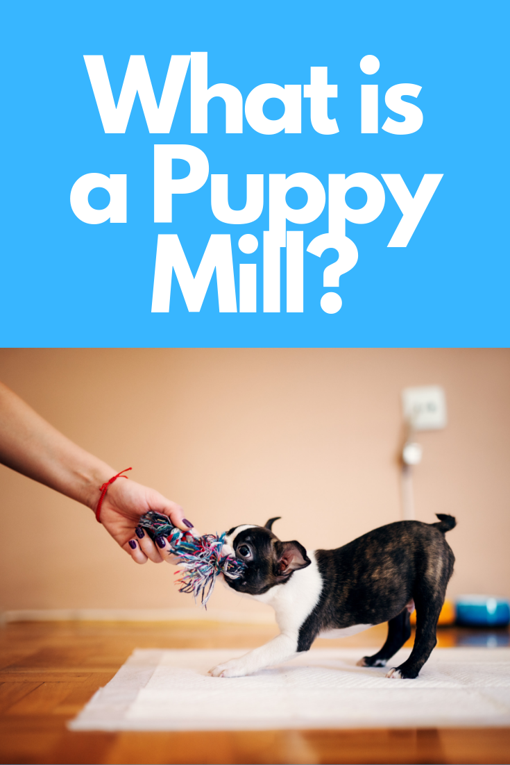 Understanding Puppy Mills & How They Operate Puppy mills