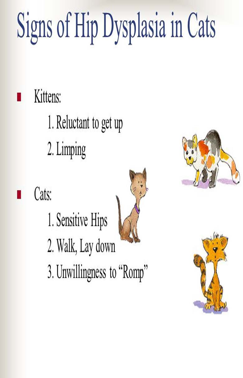 Hip Dysplasia In Cats Cat Guides Cat Health Problems Cat Health Signs Hip Dysplasia