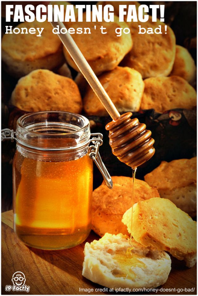 Honey is the only food that can be preserved in its edible form – up ...