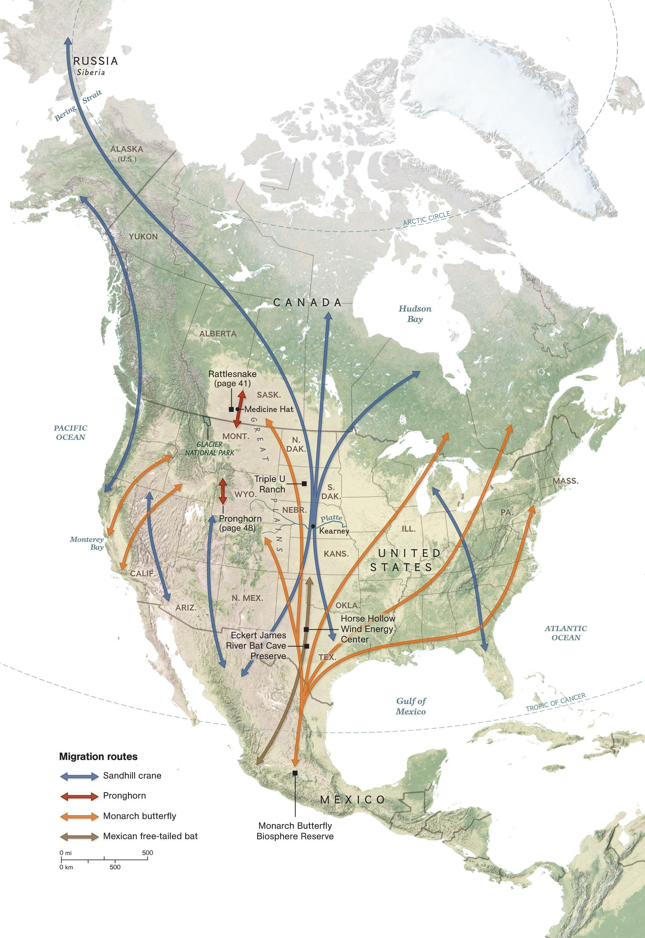 North American Species Migration Map in 2020 North