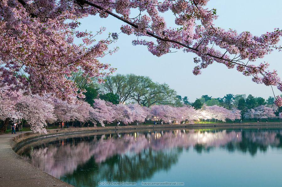 Cherry Blossoms In Washington Dc Landscape Photography Trees Beautiful Landscape Photography Spring Landscape Photography