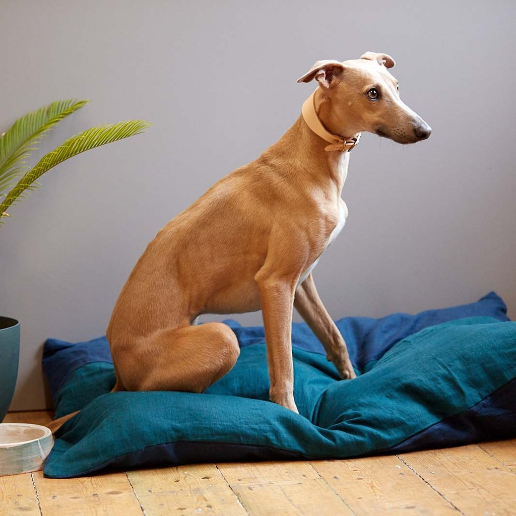 Bedtime Tails Cushion Dog Bed Teal Pre Order
