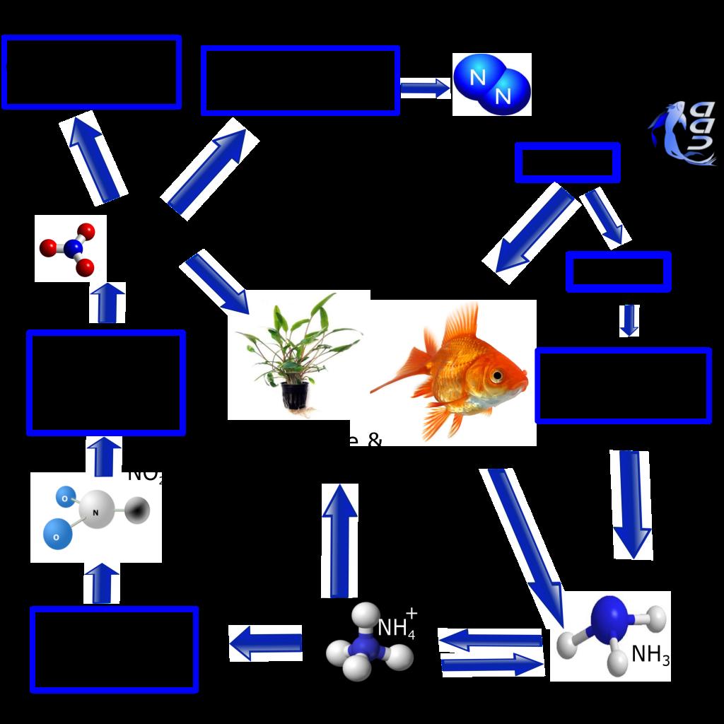 Allestire acquario nano cube : Ciclo dellazoto acquario acqua dolce acquario tropicale pesce