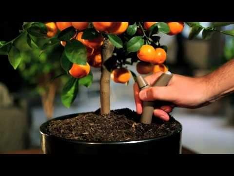 植物の[今]をワイヤレスでモニタリングするセンサーがなんともいい