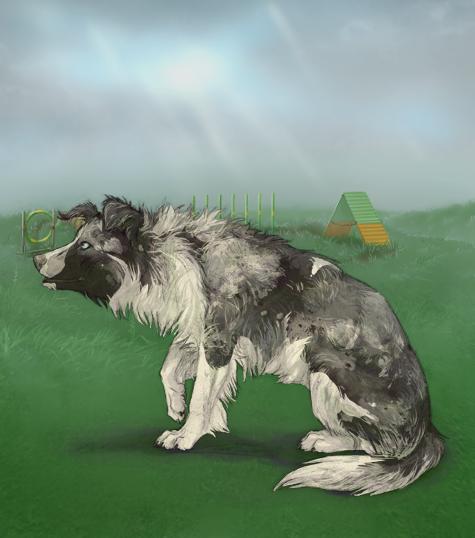 Virtual Pups Free Online Dog Game Virtual Pet Game Pomeranian Puppy Pomeranian Cute Pomeranian