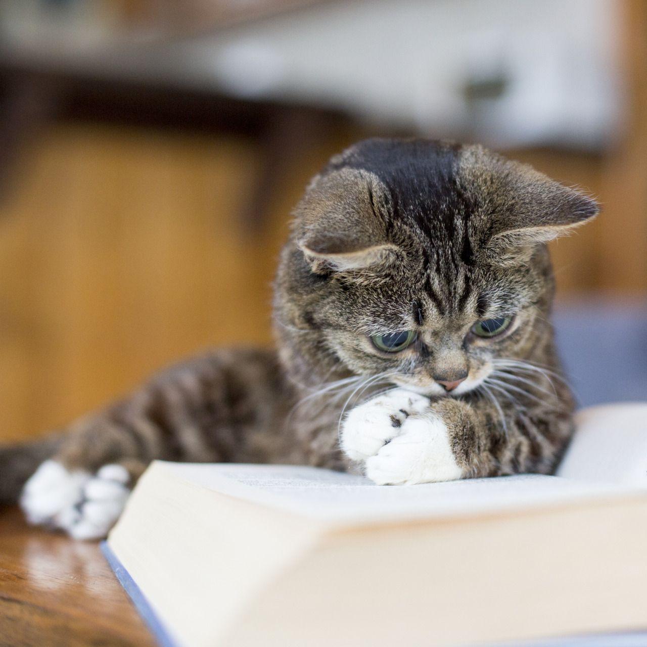 He looks like he's reading.....so cute! Last 24 hrs to pre