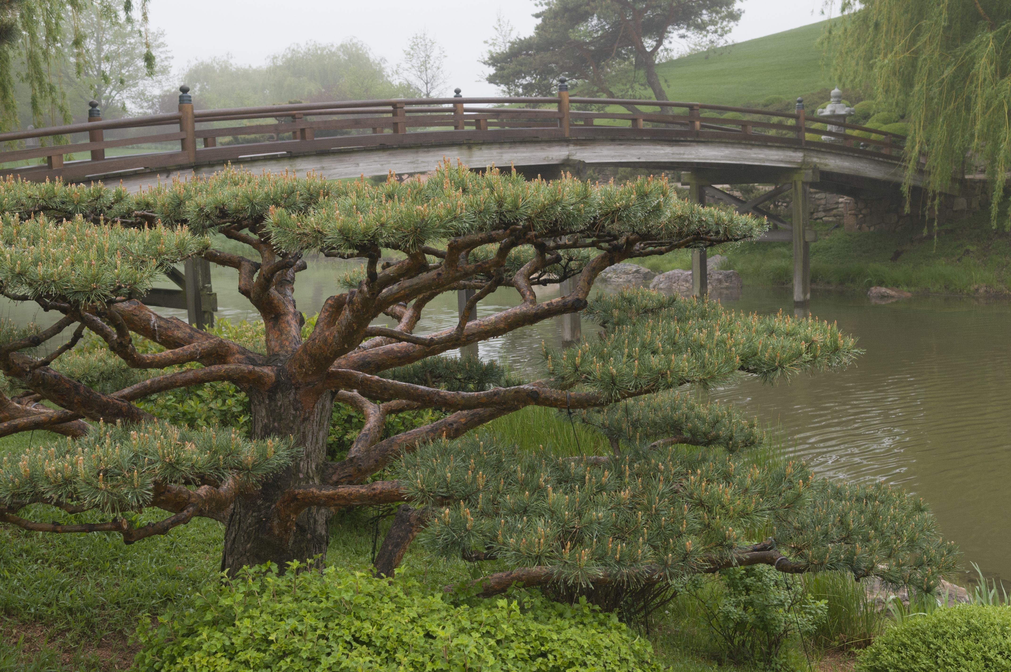 Niwaki Garden