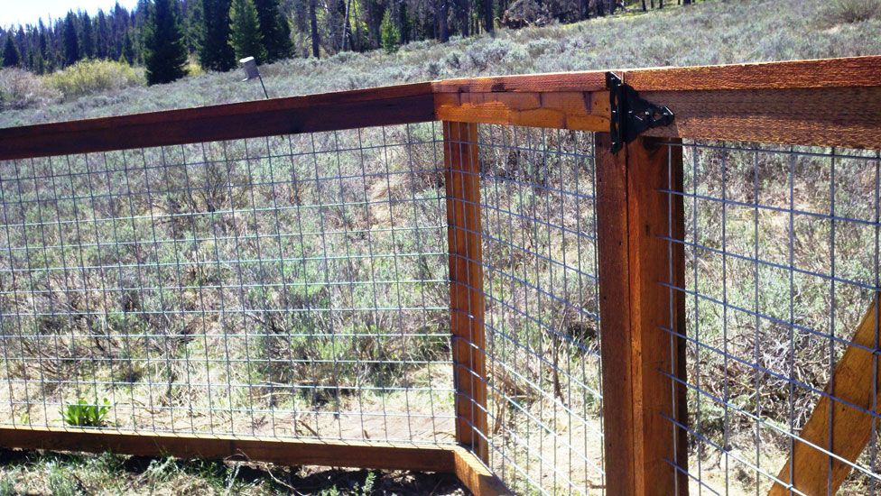 Wood Framed Fence With Heavy Mesh Wire Panels Provides A