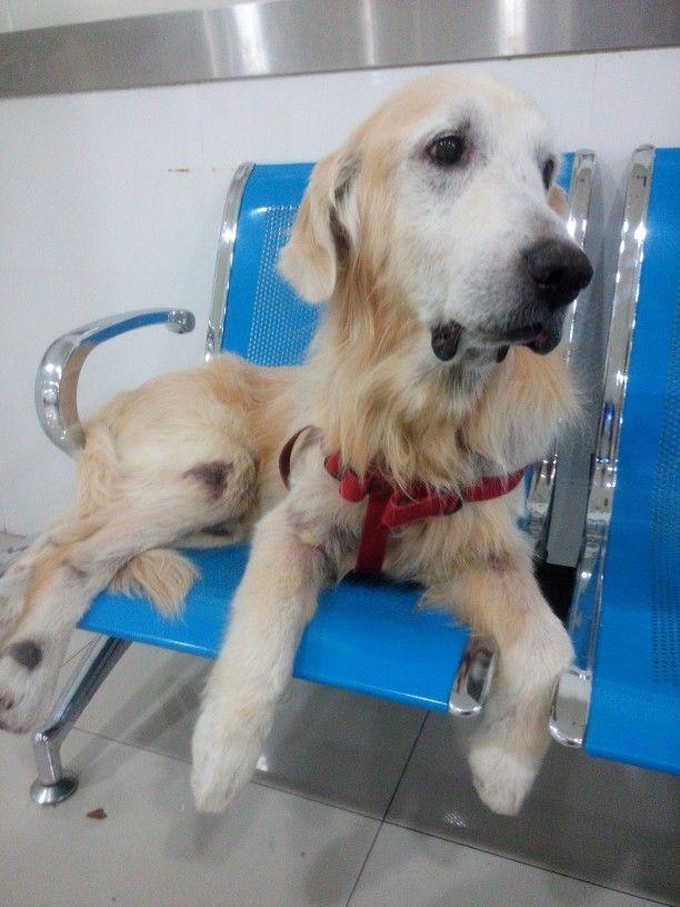 04 05 2015fk At Ku Pet Hospital The Vet Says He Seem To Be Sick