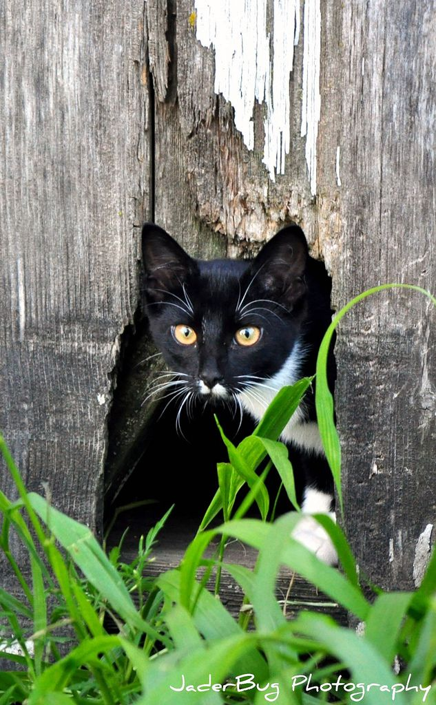 Cat behind door: Explore JaderBug Photography's photos on Flickr. JaderBug Photography has uploaded 6865 photos to Flickr.