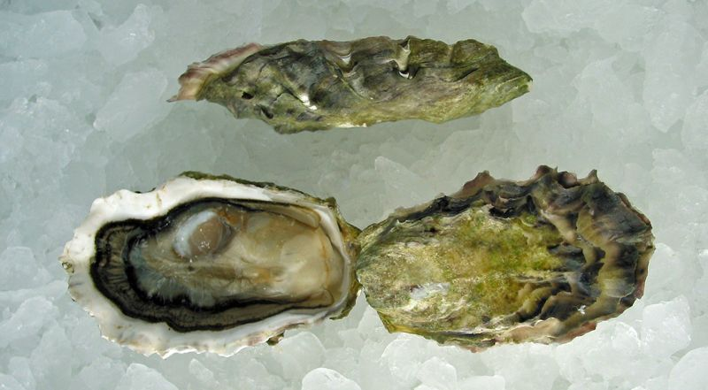Okeover Organic Oysters Oysters, Best oysters, Organic