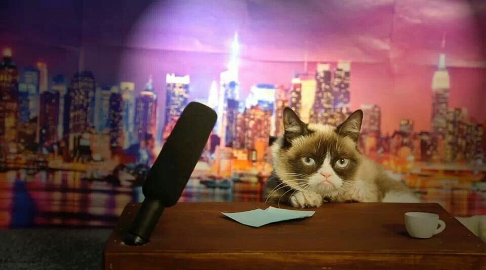 Late Night Show with Grumpy Cat Grumpy cat, Crazy cats, Cats