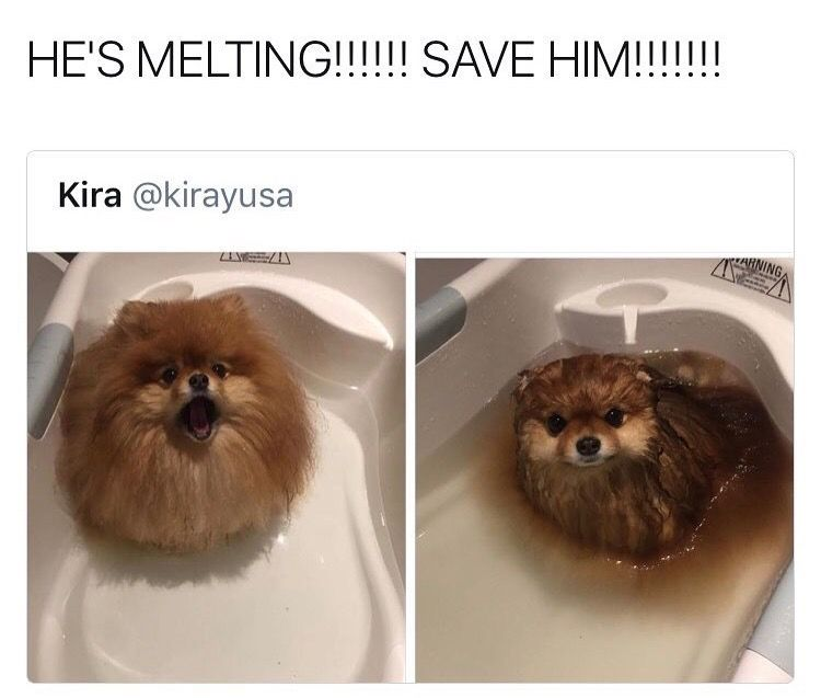 Lo Gracioso Que Son Los Perros Memes De Perros Chistosos Chistes De Perros Memes Perros