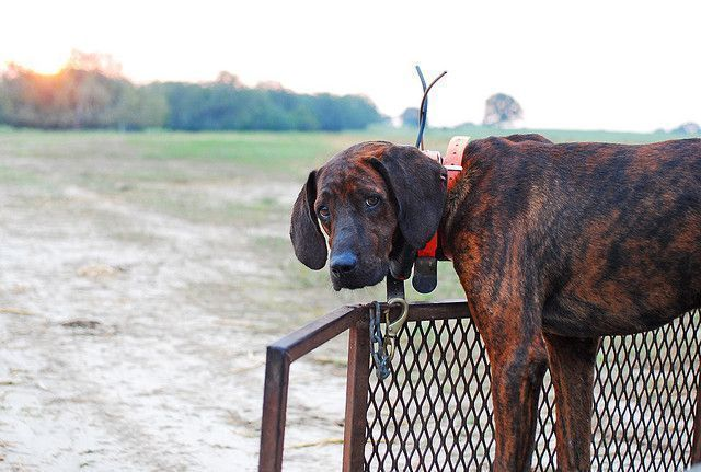 plott hound ready #plotthound plott hound ready | Flickr - Photo Sharing! #plotthound plott hound ready #plotthound plott hound ready | Flickr - Photo Sharing! #plotthound plott hound ready #plotthound plott hound ready | Flickr - Photo Sharing! #plotthound plott hound ready #plotthound plott hound ready | Flickr - Photo Sharing! #plotthound plott hound ready #plotthound plott hound ready | Flickr - Photo Sharing! #plotthound plott hound ready #plotthound plott hound ready | Flickr - Photo Shari #plotthound