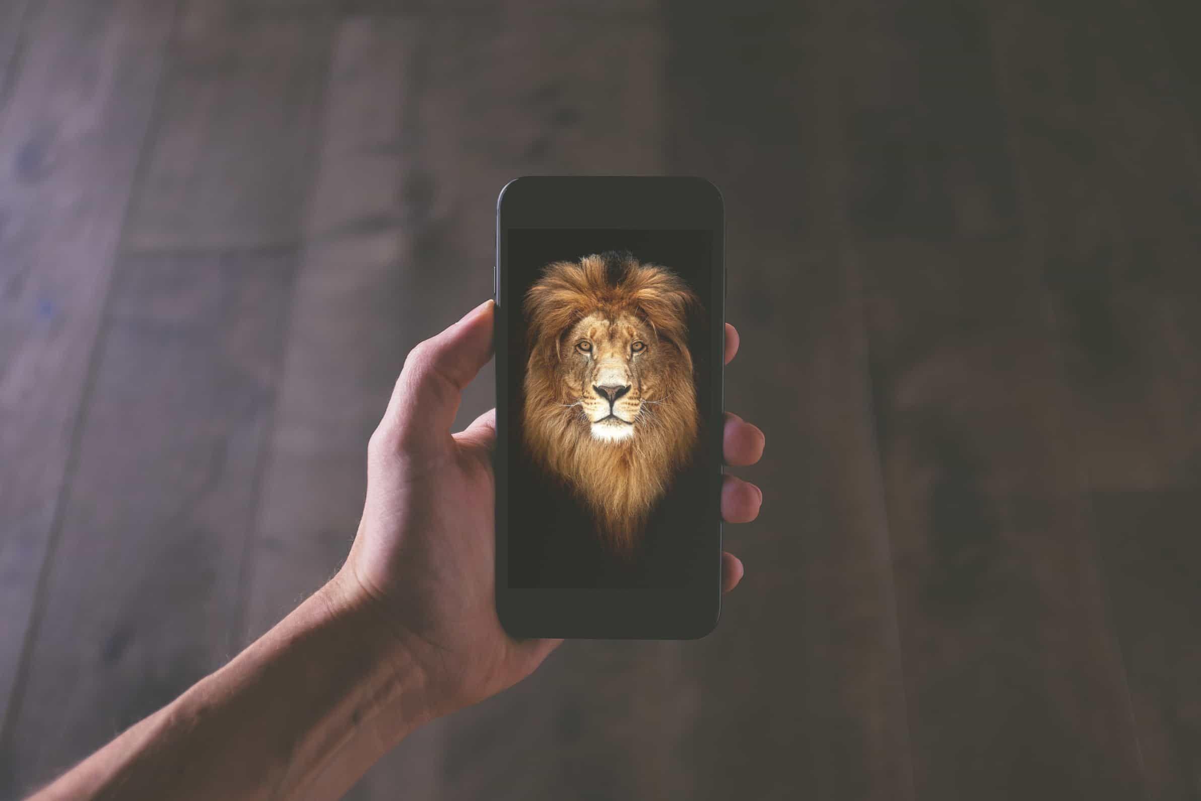 اجمل خلفيات ايفون 6 بلس Hd و ايفون 6s بلس Iphone 6 Plus Hd Wallpaper Wallpaper