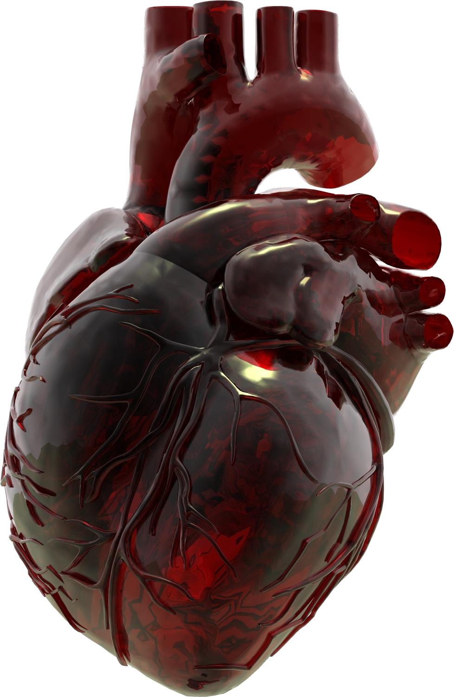 Glass heart .   Heart art, Glass art, Anatomy art