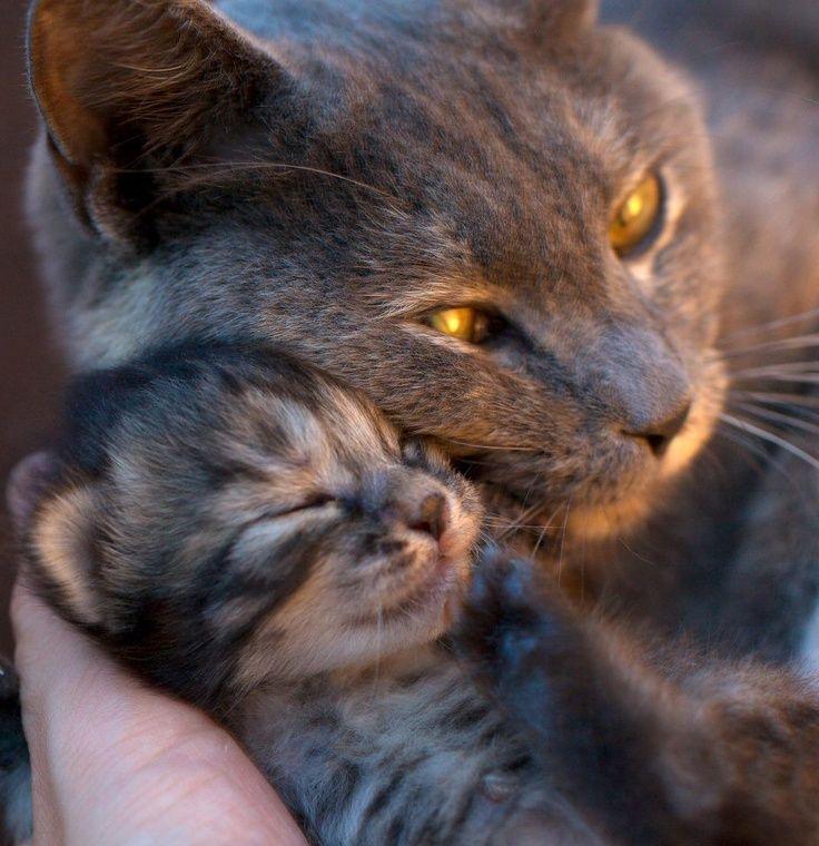 new momma love.....