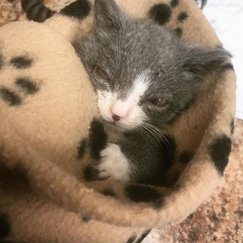 Kitten Showed Up on Porch All Alone - Woman Saved Him When ...
