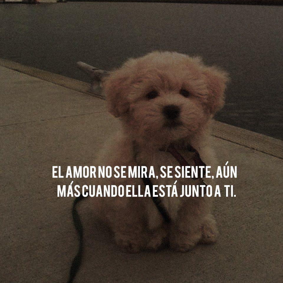 10 Imagenes De Perritos Tiernos Bebes Con Frases De Amor Frases De
